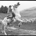 12_vladimir-sokolaev-cyganochka-pasushchaya-ovec.-okrestnosti-ongudaya.-gornyi-altai.-30.07.1980