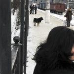 Ilya Shtutsa 022