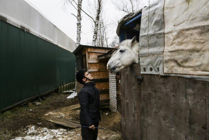Коля угощает лошадь сеном